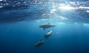 dolphins of taranto